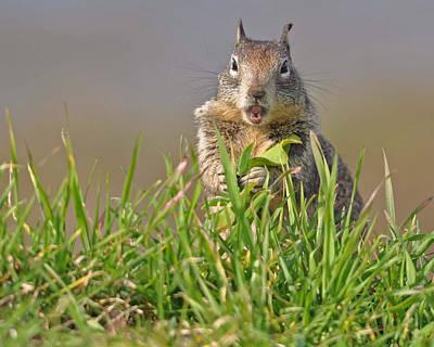 Slack-jawed Squirrel Art Print