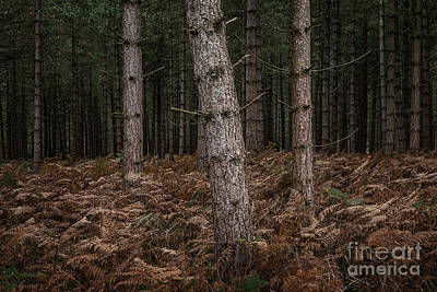 Bracken Fern Photograph - Slant New Forest by Richard Thomas
