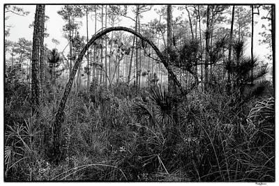 Photograph - Slash Pines 5136bw by Rudy Umans
