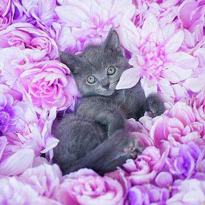 Photograph - Slater Purple Floral by Kelly Richardson