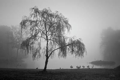 Photograph - Slater Park Landscape No. 1 Bw by Dave Gordon