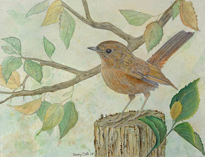 Painting - Slaty-blue Flycatcher by Sandy Clift