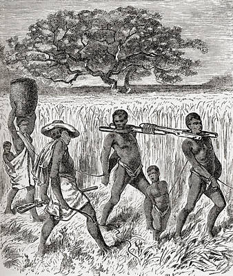 Slaves Drawing - Slave Driving In Africa In The 19th by Vintage Design Pics