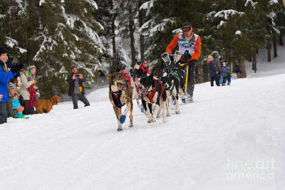 Photograph - Sled Dog Racing World Championships by IPics Photography