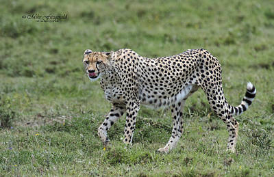 Photograph - Sleek And Swift by Mike Fitzgerald