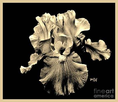 Etc. Photograph - Sleek Sepia Iris by Marsha Heiken