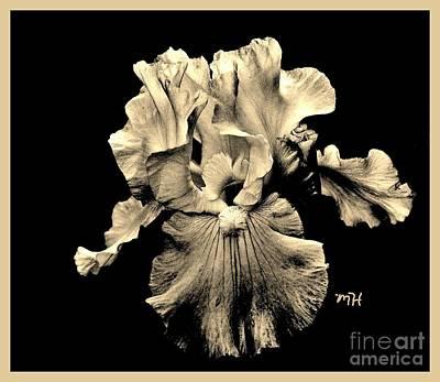 Photograph - Sleek Sepia Iris by Marsha Heiken