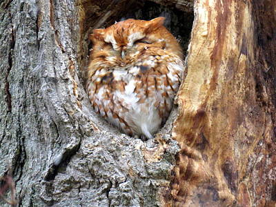 Photograph - Sleeping Among The Snowflakes by Suzanne DeGeorge
