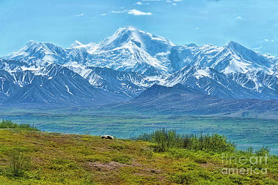 Photograph - Sleeping Bear And Mt Mckinley by David Arment