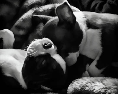 Painting - Sleeping Beauties - Boston Terriers by Jordan Blackstone