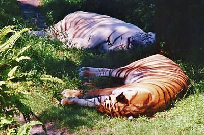 Photograph - Sleeping - Beauty by D Hackett