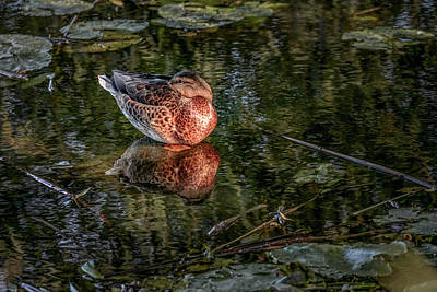 Photograph - Sleeping Beauty #g6 by Leif Sohlman