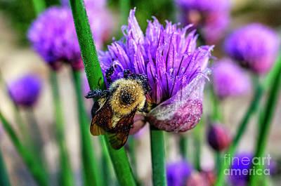 Photograph - Sleeping Bumble Bee by Thomas R Fletcher