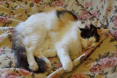 Sleepycat Original
