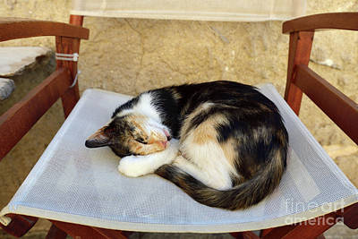 Photograph - Sleeping Cat by George Atsametakis