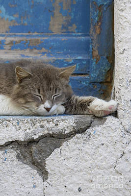 Gray Tabby Photograph - Sleeping Cat by Jean-Louis Klein & Marie-Luce Hubert