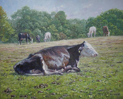 Painting - Sleeping Cow On Grass On Sunny Day by Martin Davey