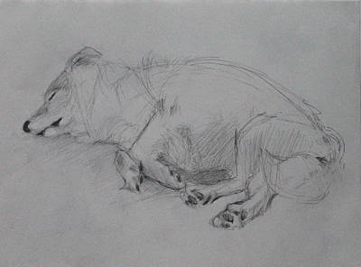 Drawing - Sleeping Dog 2 by Jackie Hoats Shields