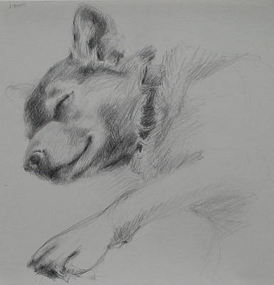 Drawing - Sleeping Dog I by Jackie Hoats Shields