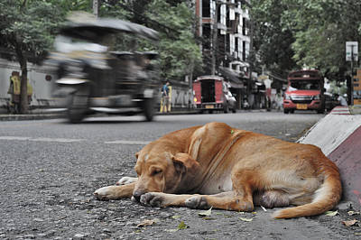 Photograph - Sleeping Dog by Lee Webb