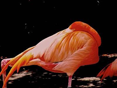 sleeping Flamingo  Art Print by Mariano Rivera