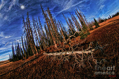 Photograph - Sleeping Forest by Blake Richards