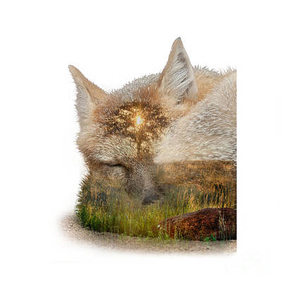 Photograph - Sleeping Fox And Prairie Sunrise Double Exposure by DS Dodd