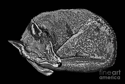 Digital Art - Sleeping Fox by Stevyn Llewellyn