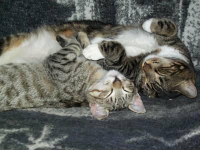 Photograph - Sleeping Furbabies by Janet Hinshaw