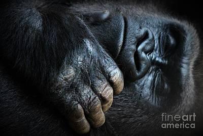 Sleeping Gorilla Art Print by Paulette Thomas