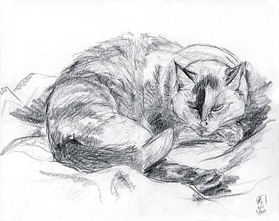 Drawing - Sleeping Jago by Brandy Woods