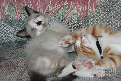 Calista Photograph - Sleeping Kittens by Judy Whitton