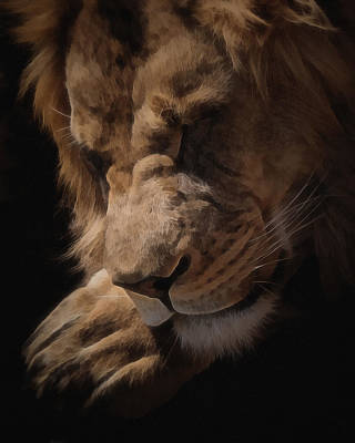 Sleeping Lion Digital Art Art Print