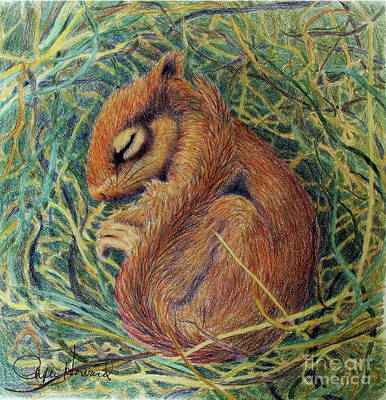 Drawing - Sleeping by Phyllis Howard