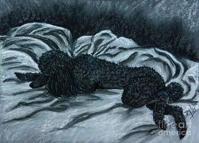 Sleeping Poodle Art Print