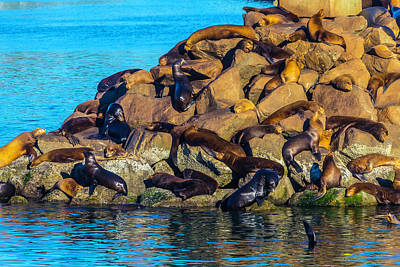 California Sea Lions Photograph - Sleeping Sea Lions by Garry Gay
