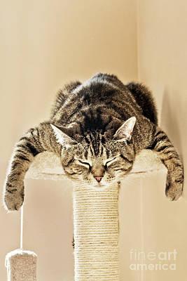 Photograph - Sleeping Splat Cat by Terri Waters