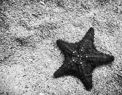 Sleeping Starfish Art Print