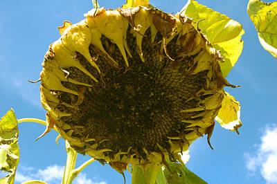 Sleeping Sunflower Original by Trish Hale