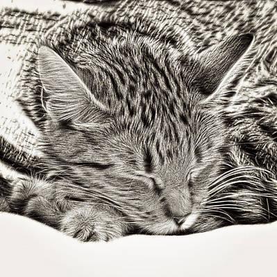 Rendering Photograph - Sleeping Tabby by Tom Gowanlock