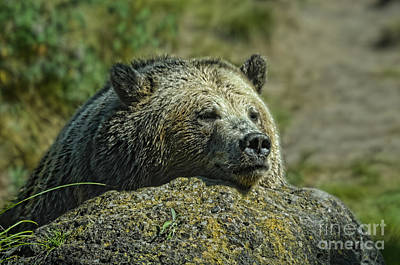 Jim Fitzpatrick Digital Art - Sleepy Bear by Jim Fitzpatrick
