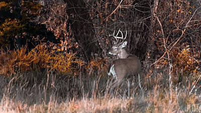 Photograph - Sleepy Buck by Garett Gabriel