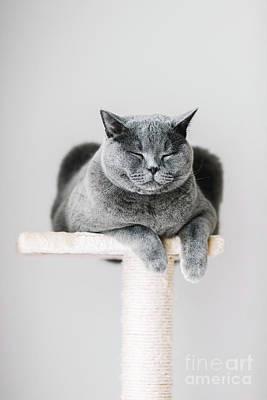 Little Mosters - Sleepy cat laying on the scratcher. by Michal Bednarek