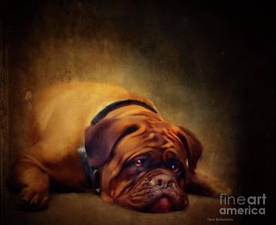 Painting - Sleepy Dog by Tara Richardson