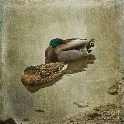 Photograph - Sleepy Ducks by Liz Alderdice