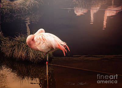 Photograph - Sleepy Flamingo by Melissa Messick