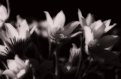 Flower Photograph - Sleepy Flowers by Marilyn Hunt