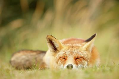 Sleeping Photograph - Sleepy Fox Is Sleepy IIi by Roeselien Raimond