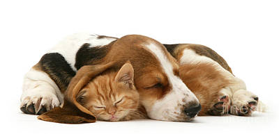 Photograph - Sleepy Ginger Pals by Warren Photographic