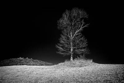 Photograph - Sleepy Hollow Tree by Dave Beckerman